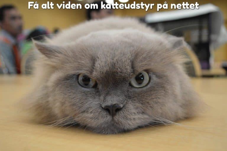 Få alt viden om katteudstyr på nettet
